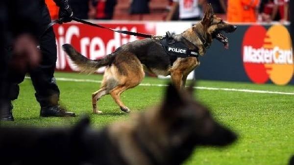 Polis köpeği futbolcuyu ısırdı!