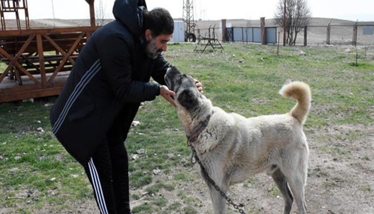 Ünal Karaman'ın kangal köpeği sevdası