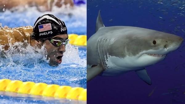 Phelps beyaz köpek balığı ile yarışacak!