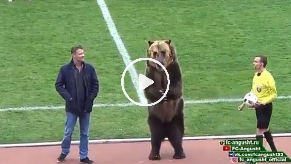 Rusya'da ayı futbolseverleri böyle coşturdu