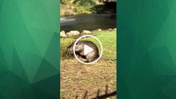 Cristiano Ronaldo'nun evinin bahçesinde beslediği hayvanlar