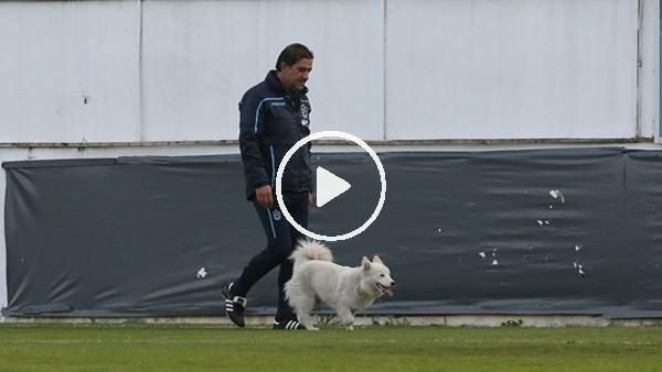 'Ünal Karaman sokak köpeğine sahip çıktı