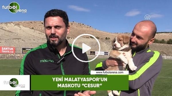 "'Yeni Malatyaspor'un maskotu ""Cesur"""