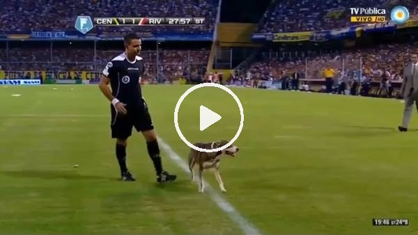 'Arjantin'de sahaya giren köpek, kalenin önüne tuvaletini yaptı