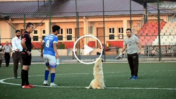 Oyun oynamak isteyen köpek sahaya girince maça ara verildi