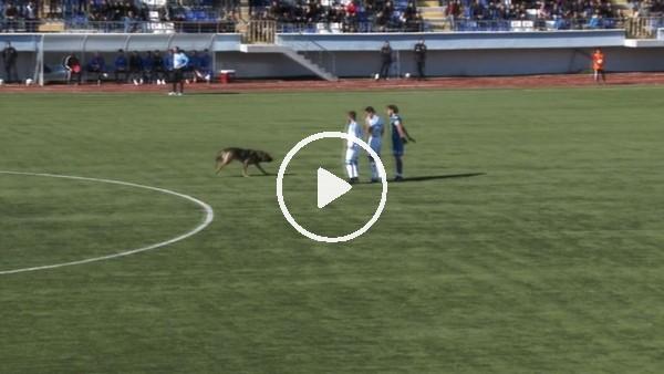 Sahaya köpek girince maç 10 dakika durdu