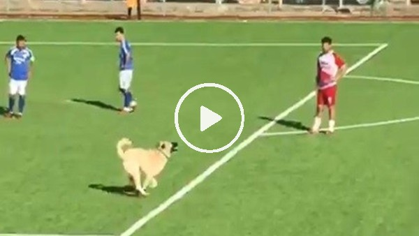 Maç sırasında sahaya giren köpek çıkmak istemeyince devreye futbolcular girdi