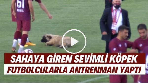 Sevimli köpek önce futbolcularla antrenman yaptı sonra sahadan çıkmadı.